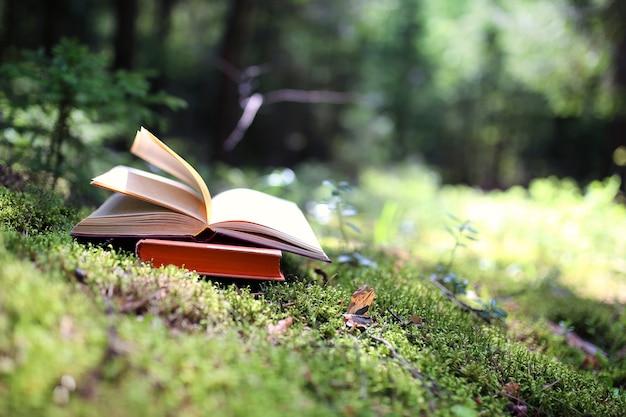 Libro aperto all'aperto. sapere è potere. prenota in una foresta. prenota su un moncone