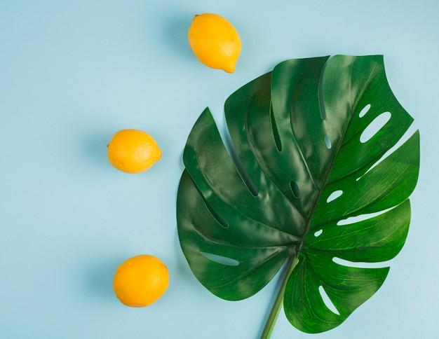 Limoni di vista superiore con foglia tropicale