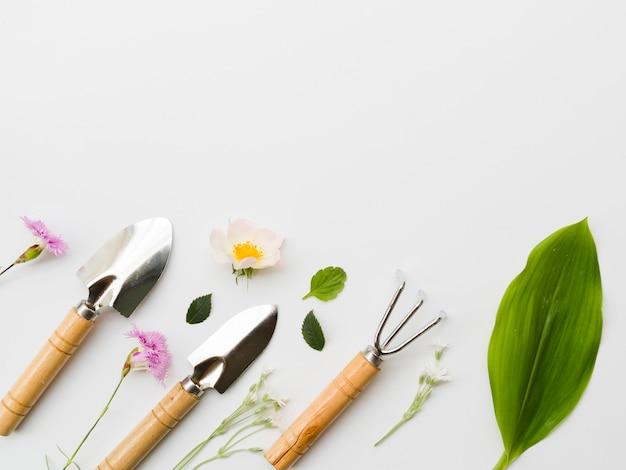 Linea di attrezzi da giardinaggio vista dall'alto con piante