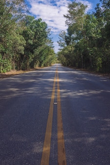 Linea di strada nella foresta
