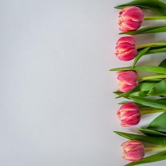Linea di tulipani su sfondo bianco