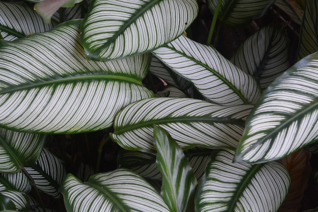 Linee di fibra nel primo piano foglia verde e bianco