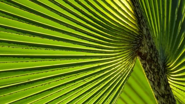 Linee e trame di foglie di palma verdi