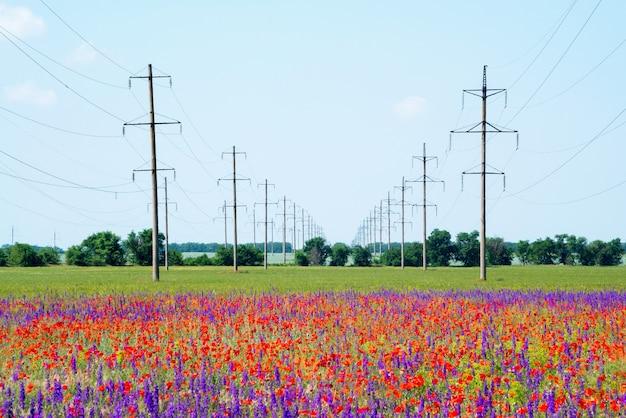 Linee elettriche ad alta tensione su campi fioriti con papaveri rossi.