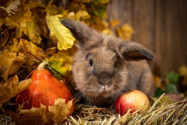 Linografia di coniglio nello scenario dalle foglie di autunno delle zucche di fieno