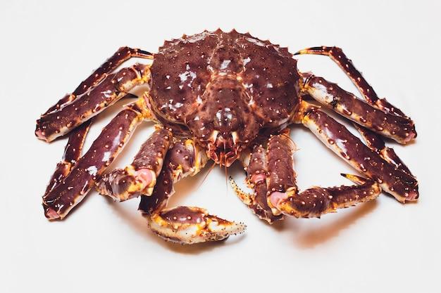 Live king crab su succinto bianco.