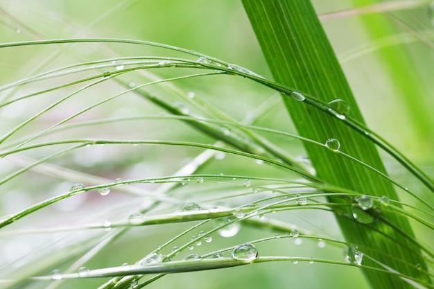 Lo sfondo naturale con erba verde in pioggia cade nella mattina dell'estate