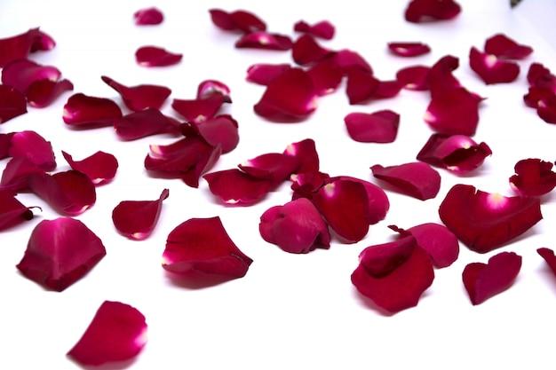 Lo studio isolato petali di rosa ha sparato su bianco