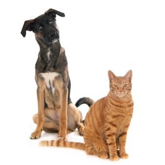 Lo zenzero gatto e cucciolo di cane insieme contro uno sfondo bianco