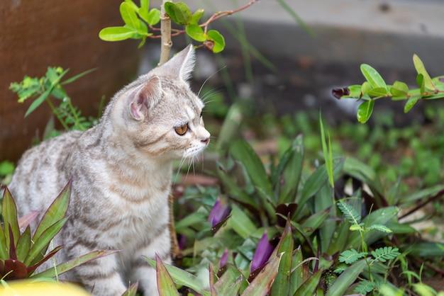 Lovely cute little cat con bellissimi occhi gialli in giardino all'aperto alla ricerca di uccelli