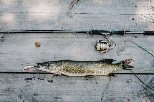 Luccio dei grandi pesci sugli ami, cucchiaio su una tabella di legno grigia