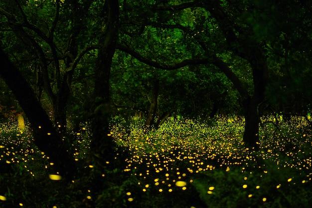 Lucciola nella foresta
