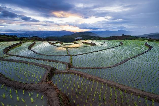 Luce del sole sui campi di riso terrazze.