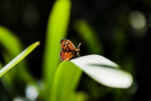 Luce solare che cade sulla bella farfalla gialla sopra la foglia verde