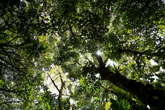 Luce solare che passa attraverso il ramo di albero in foresta