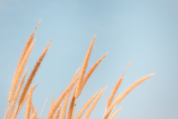Luce solare di impatto erba fiore in autunno