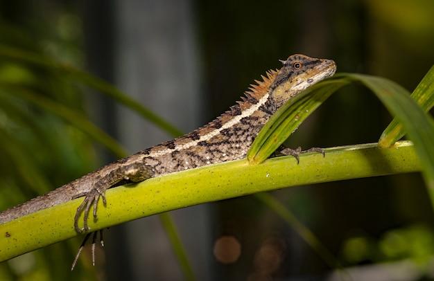 Lucertola variopinta che si siede sul ramo verde