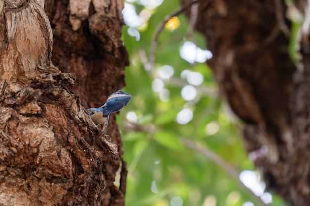 Lucertole colorate su un ramo al parco.