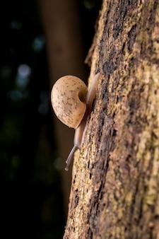 Lumaca di bambino su un albero nella foresta.
