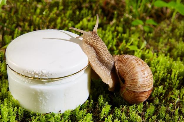 Lumaca di borgogna marrone su un contenitore di crema bianca cosmetica in un barattolo su una parete naturale di muschio verde.