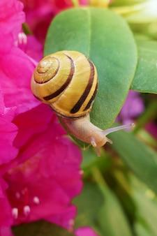 Lumaca su un fiore