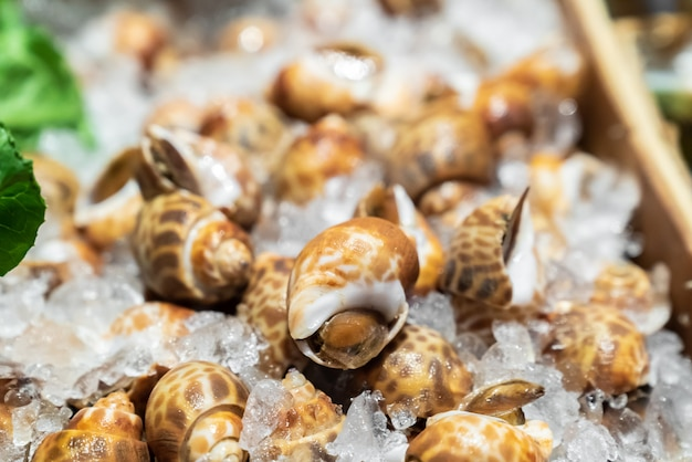 Lumache di babilonia pesce sul ghiaccio