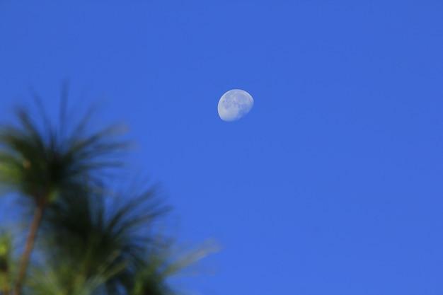 Luna e foglie di pino diurne
