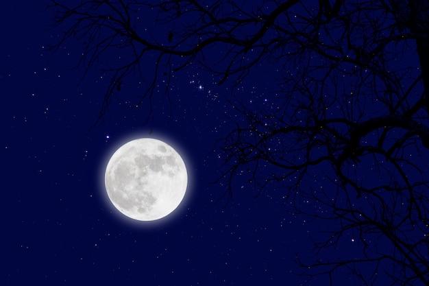 Luna piena e stella con rami secchi. inverno