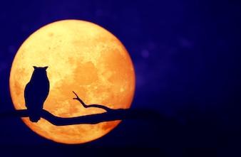 Luna piena nel cielo notturno
