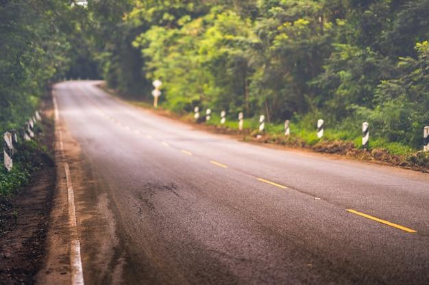 Lunga strada o strada principale nella foresta
