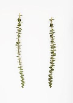 Lunghi ramoscelli di piante tropicali