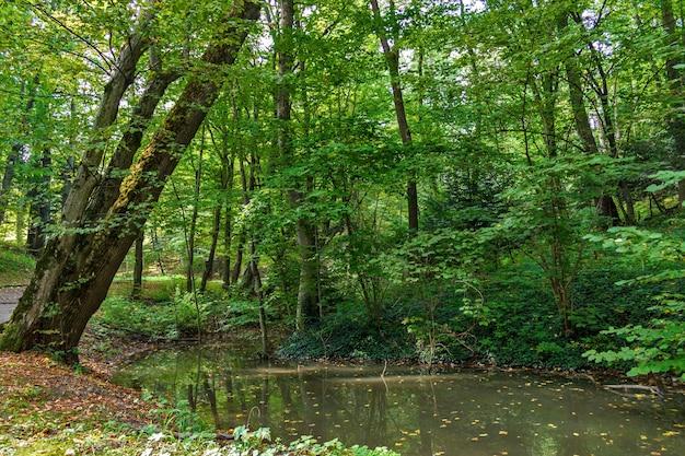 Lussureggiante palude verde e scena foresta tropicale.