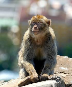 Macaco seduto vicino