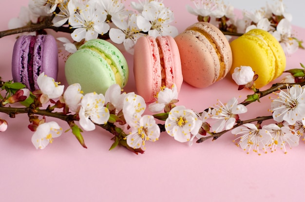 Macarons o maccheroni francesi variopinti decorati con i fiori di fioritura dell'albicocca sul rosa pastello