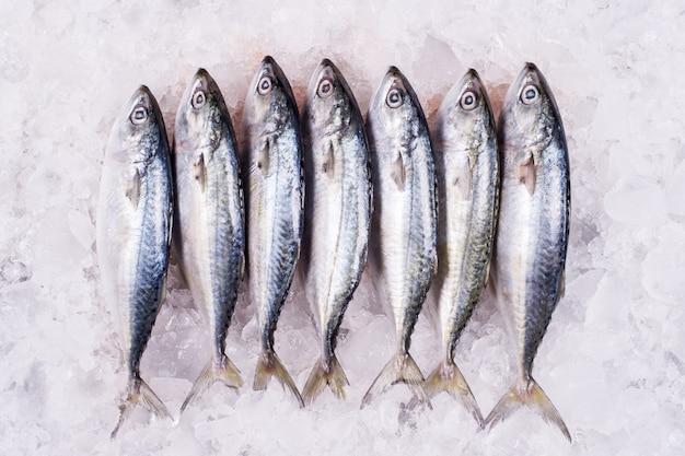 Mackerel commercio all'ingrosso di prodotti ittici al distributore vendita al dettaglio di frutti di mare import export attività pesce congelato