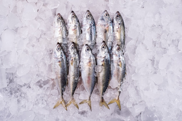 Mackerel industria ittica all'ingrosso congelata dal mare al distributore di frutti di mare al dettaglio