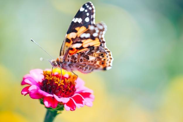 Macro del primo piano della farfalla di guscio di testuggine che si siede su un fiore