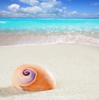 Macro del primo piano della sabbia bianca tropicale della lumaca di mare della spiaggia