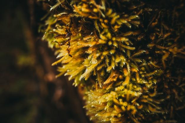 Macro dell'albero del muschio