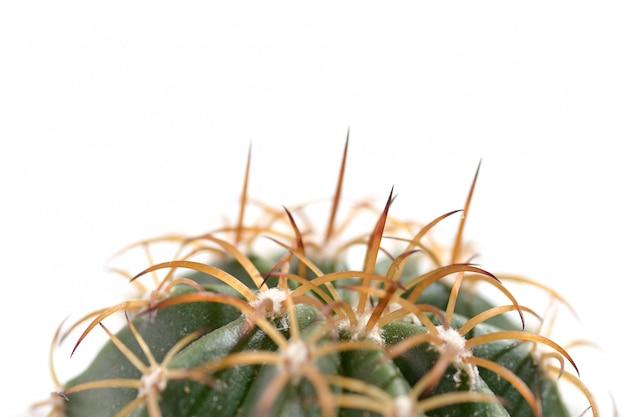 Macro di cactaceae