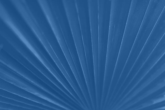 Macro di foglia di palma con lo spazio della copia nel fondo monocromatico di colore. effetto luce solare e bokeh soleggiato. colore blu e calmo alla moda.