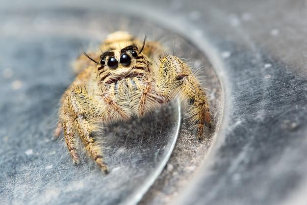 Macro di ragno giallo