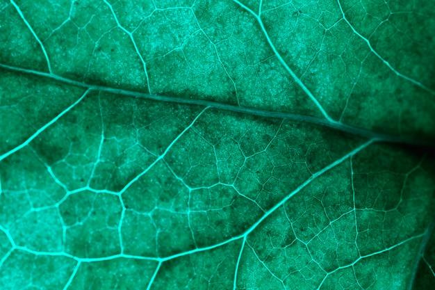 Macro di una foglia verde