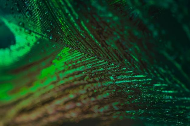Macro estrema di una piuma di pavone verde