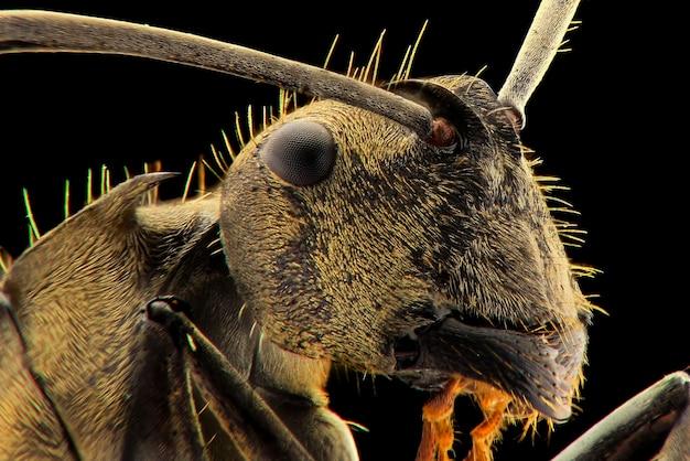 Macro faccia di formica