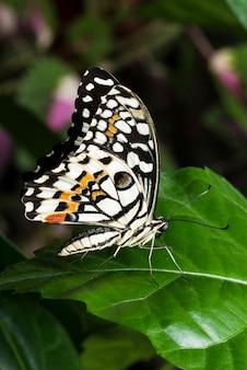 Macro farfalla colorata sulla foglia