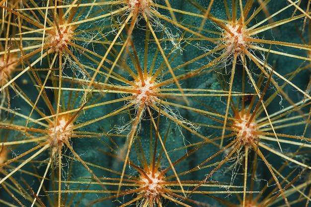 Macro fondo floreale naturale della spina verde del cactus