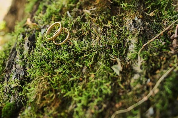 Macro fotografia di nozze e anelli di fidanzamento seduto sulla cima di muschio