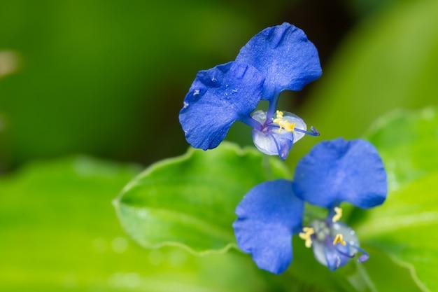 Macro wildflower del fondo