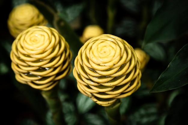 Macrofotografia gialla della pianta tropicale